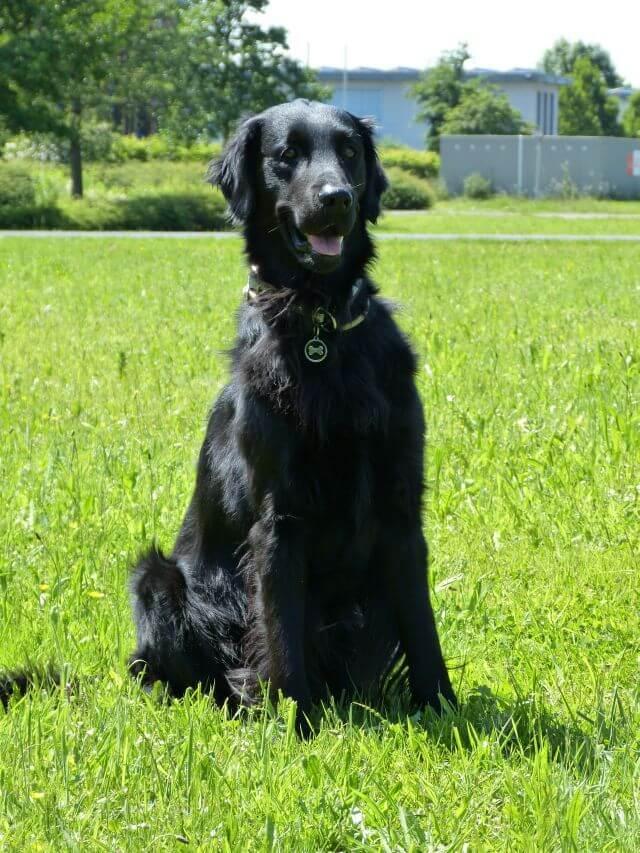 Hannes - Therapiehund aus Leidenschaft