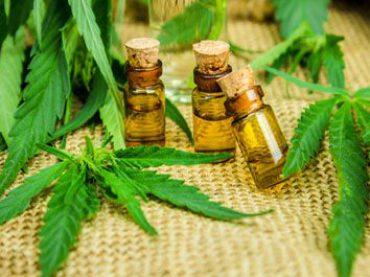 Darf Cannabis zu therapeutischen Zwecken legal angebaut werden