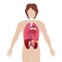 Lungenembolie: Tödliche Gefahr für bettlägerige und ältere Menschen