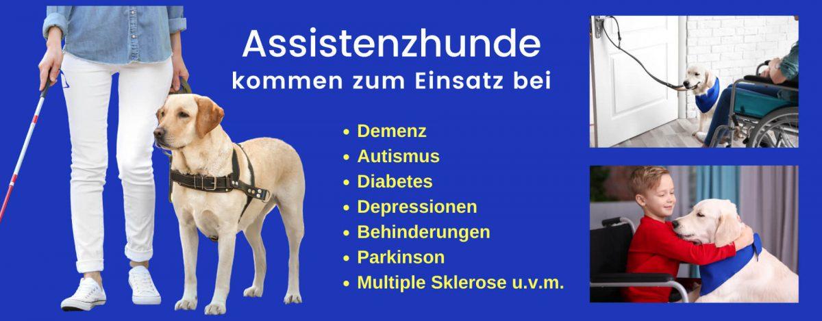 Assistenzhund – Einsatz bei Diabetes, Epilepsie, Demenz, Autismus uvm.